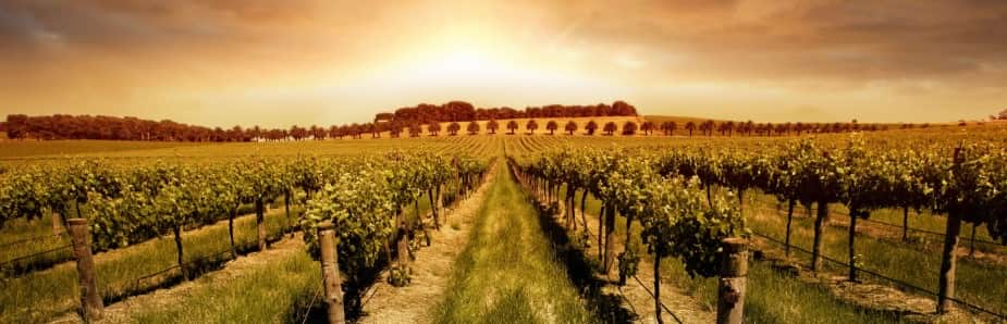 business plan cantina vinicola