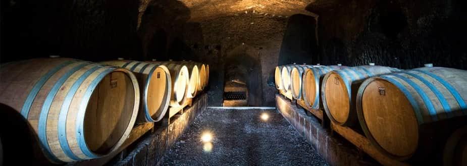 esempio business plan azienda vitivinicola
